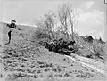 A bulldozer winches a felled tree off a hillside (AM 77575-1).jpg