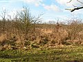 Abandoned Orchard - geograph.org.uk - 123417.jpg