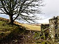 Abandoned croft, Little Rogart - geograph.org.uk - 712724.jpg
