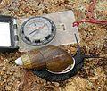 Achatina fulica - Flickr - Dick Culbert (1).jpg