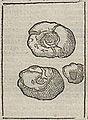 Acosta - 1624 - Historie naturael en morael - UB Radboud Uni Nijmegen - 109862082 210.jpeg