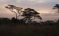 African Sunset (5065807922).jpg