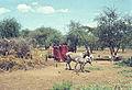Afrika1963-015 hg.jpg