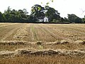 After the Harvest - geograph.org.uk - 46230.jpg