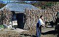 Agnene ristes av (1952) (15385415663).jpg