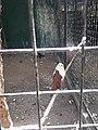 Albay Park & Wildlife 5.jpg