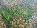 Algas en el fondo del río Lozoya.jpg