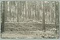 Alkuperäinen METSÄ ON SUOMEN TUKI -istutus, Th. Sunell 1931 PK0098.jpg