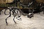 Allosaurus 1 salt lake city.jpg