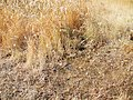 Alxa Zuoqi, Alxa, Inner Mongolia, China - panoramio (31).jpg