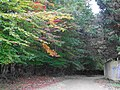 Amazing Fall In Nowshahr Jungle - panoramio (3).jpg