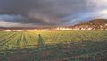 Amphibienschutzgebiet Gelnhausen-Meerholz 2014-02-02-14-55-40.png
