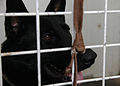 An Iraqi Police K-9 dog stares out of his kennel at his trainers in Basrah, Iraq, May 3, 2011 110503-A-YD132-050.jpg