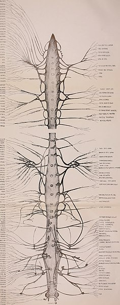 File:An atlas of the differential diagnosis of the diseases of the nervous system; analytical and semeiological neurological charts (1913) (14762383044).jpg