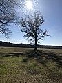 Andersonville Civil War Prison.jpg