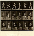 Animal locomotion. Plate 10 (Boston Public Library).jpg