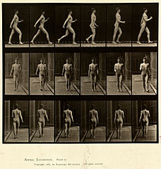 Animal locomotion. Plate 10 (Boston Public Library).jpg