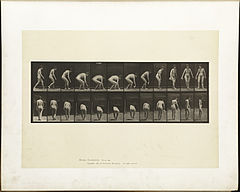 Animal locomotion. Plate 220 (Boston Public Library).jpg