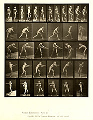 Animal locomotion. Plate 521 (Boston Public Library).jpg