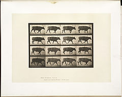 Animal locomotion. Plate 672 (Boston Public Library).jpg