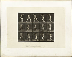 Animal locomotion. Plate 73 (Boston Public Library).jpg