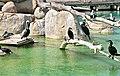 Animales del l'oceanografico-valencia-2009 (6).JPG