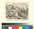 Animaux de basse-cour - coq et poule de Cochinechine, poules de Padoue huppées, poules de Balham, pigeons, dindons noirs et blancs (NYPL b14504919-1147698).jpg