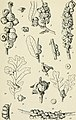 Annual report (c1904-1920) (18423390142).jpg