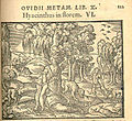 Apollo e Giacinto - 1563 - da - Metamorphoses, ed. Johann Spreng, ill. Virgil Solis (Frankfurt-am-Main, 1563). dett.jpg