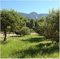 Apple Orchard, Oak Glen, CA.6-23-12b (7449459492).jpg