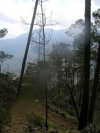 Pico Duarte - Approaching the peak of Pico Duarte.