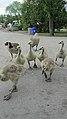 Assiniboine Park Zoo, Winnipeg (480524) (9445072539).jpg