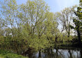 At the River Lee, Fishers Green, Lee Valley, Waltham Abbey, Essex, England 04.jpg