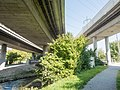 Autobahn A1L Aubrugg Brücken 20170923-jag9889.jpg