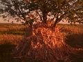Autumn - 57 (2009). (15780930844).jpg