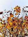 Autumn 2015 (127915501).jpeg