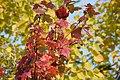 Autumn Colours (30434806765).jpg