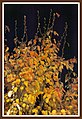 Autumn Leaves at night-01 (5660139931).jpg