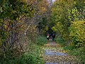 Autumn colours on railway path near Heddon Haughs - geograph.org.uk - 1038612.jpg