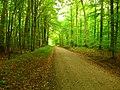 Autumn comes - Flickr - Stiller Beobachter.jpg