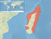 Aviceda madagascariensis distribution map
