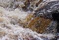Aysgarth Falls MMB 62.jpg