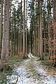 Bürmoos - Stierlingwald - Motiv - 2019 01 27 - Weg.jpg