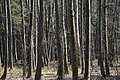 Bürmoos - Stierlingwald Motiv - 2014 03 10 - 1.jpg