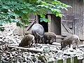 Břežanský zookoutek, prasata.jpg