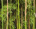 Bamboo Richelieu.jpg