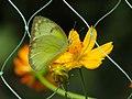 Bangabandhu Sheikh Mujib Safari Park-6.jpg