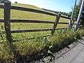 Bangor, UK - panoramio (237).jpg