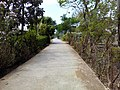 Barangay Malibo Matanda - panoramio (10).jpg
