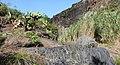 Barranco de Afur, Macizo de Anaga, Tenerife, Spain 17.jpg
